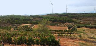 Billeder fra vinmarken